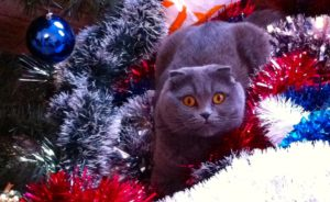 cat with decorations
