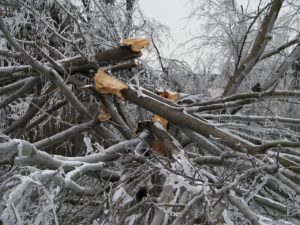 tree-destruction-282553_1280