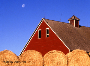 round bales and barn scene