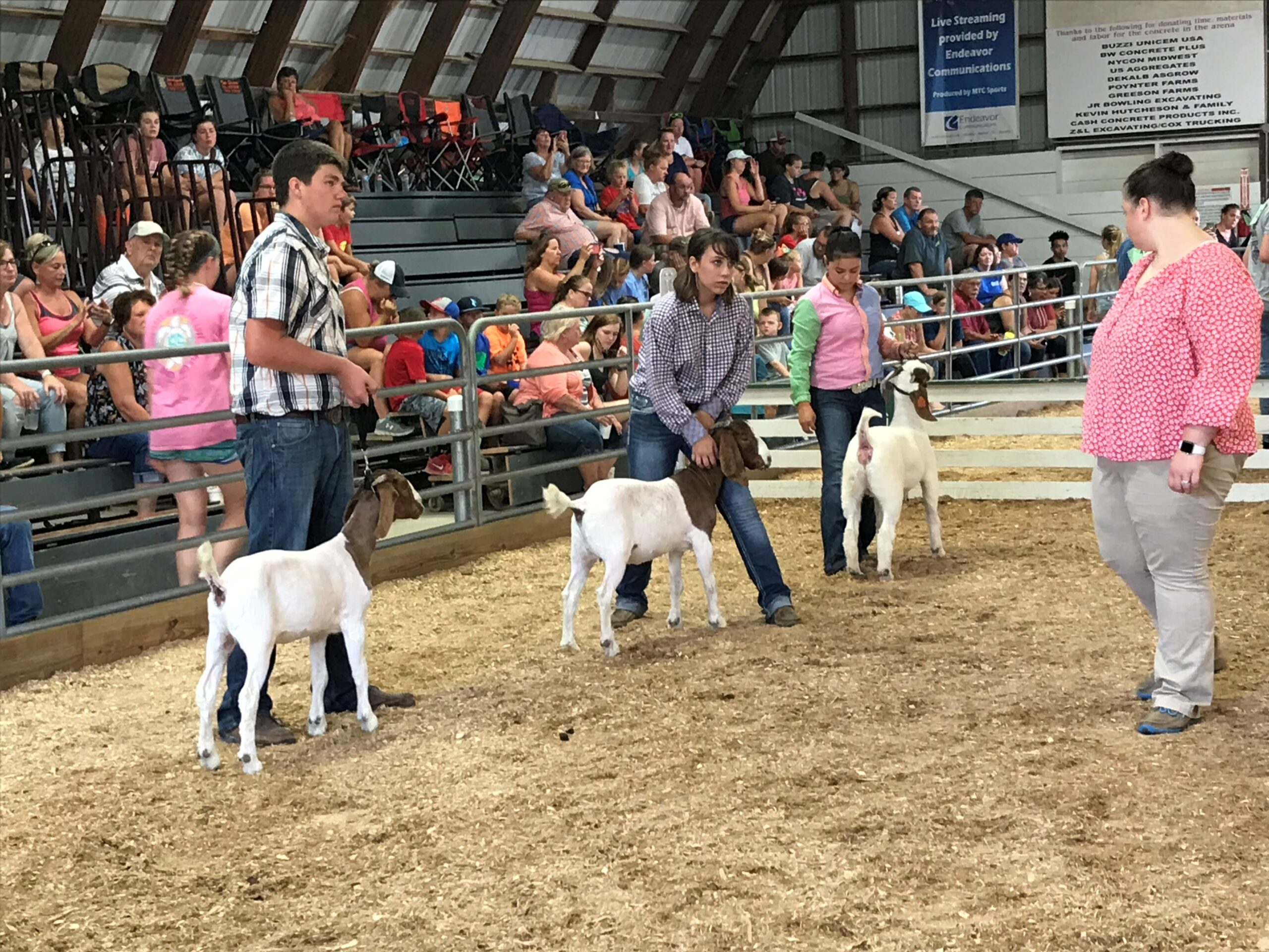 county fair goat show