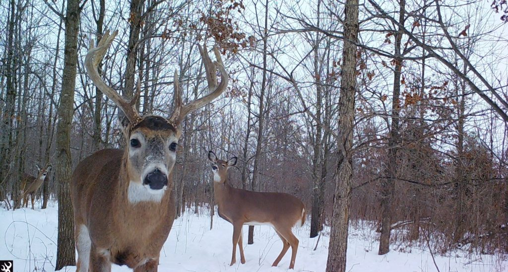 Two deer in forest area with snow on ground.